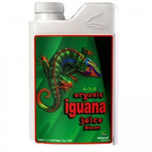Iguana Juice Bloom 1L